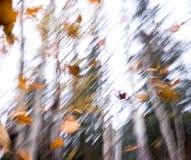 Падая листья Стоковые Фото
