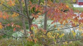 Падая покрашенные листья Стоковые Фотографии RF