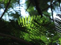 Падая свет на листьях Стоковое Изображение RF