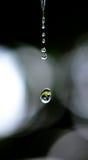 Падая waterdrops Стоковое фото RF