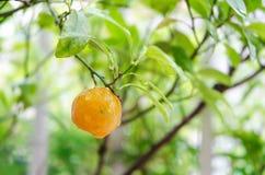 Падение апельсина и воды Стоковые Изображения RF