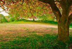 Падение вишни Стоковое фото RF