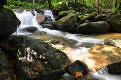 Падение воды в природу Стоковое Фото