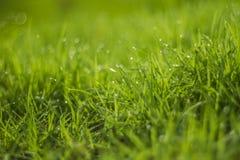 Падение воды на зеленой траве Стоковые Фотографии RF