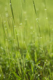 Падение воды на зеленой траве Стоковые Изображения RF