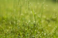 Падение воды на зеленой траве Стоковое Изображение RF