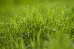 Падение воды на зеленой траве Стоковые Фото