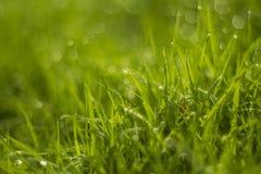 Падение воды на зеленой траве Стоковая Фотография RF