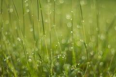 Падение воды на зеленой траве Стоковое Изображение