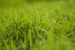 Падение воды на зеленой траве Стоковая Фотография