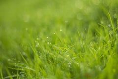 Падение воды на зеленой траве Стоковое Фото