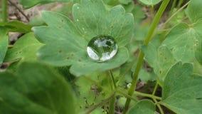 Падение воды на листьях Стоковые Изображения