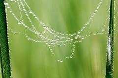 Падение воды на паутине Стоковые Фотографии RF