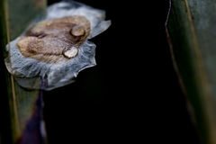 Падение воды на семени Стоковые Фотографии RF