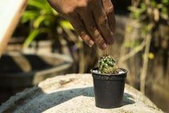 Падение воды от руки к цветочному горшку кактуса Стоковое Фото