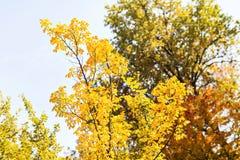 Падение выходит деревья, концепция осени Стоковая Фотография