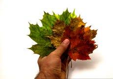 падение выходит естественная текстура живой Стоковые Фотографии RF