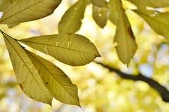 падение выходит естественная текстура живой Стоковые Изображения RF