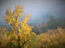 падение выходит естественная текстура живой Стоковое Фото