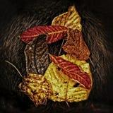 падение выходит естественная текстура живой Стоковые Фото