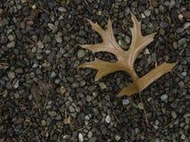 падение выходит естественная текстура живой Стоковые Изображения