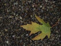 падение выходит естественная текстура живой Стоковое фото RF