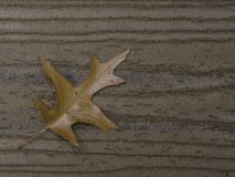 падение выходит естественная текстура живой Стоковое Изображение RF