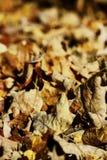 падение выходит естественная текстура живой Стоковое Изображение
