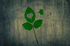 Падение в метафору фото влюбленности Кленовый лист с формой сердца на деревянной предпосылке Стоковая Фотография