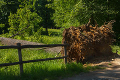 Падение дерева в парке Стоковая Фотография