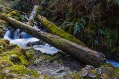 Падение дерева заводи падений Стоковое Фото