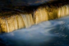 падение золотистое Стоковое фото RF