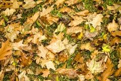 Падение листьев осени Стоковые Изображения