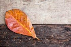 Падение лист на деревянную доску Стоковое Изображение RF