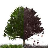 Падение и весна Стоковые Изображения RF