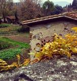 Падение и листья стоковая фотография