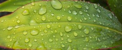 Падение и лист Стоковое Изображение