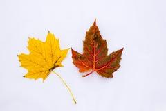 падение Канады осени выходит клен Стоковое Изображение RF