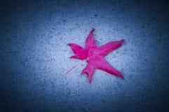 Падение клена лист осени к полу Стоковые Фото