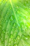 Падение на листьях Стоковое Изображение RF