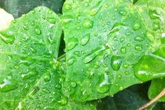 Падение на листьях Стоковое Изображение