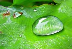 Падение на листьях Стоковые Фотографии RF