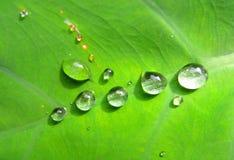 Падение на листьях Стоковое Фото
