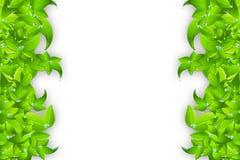 Падение на листьях Стоковая Фотография