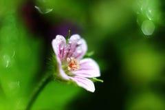 Падение на цветке Стоковые Изображения RF