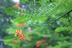 Падение дождя на зеленых листьях Стоковые Изображения RF