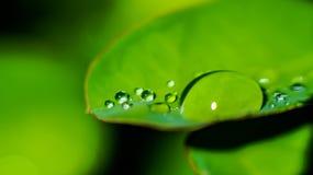 Падение дождя на лист Стоковое Изображение