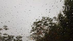 Падение дождя на окне Стоковая Фотография