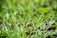 Падение дождя на траве Стоковые Фото