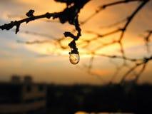 Падение дождя Стоковое Изображение